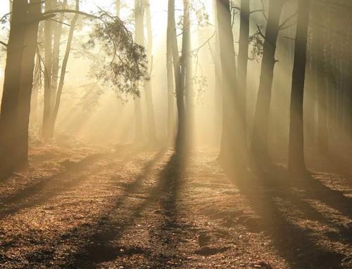 Waldviertel Akademie: Woran glauben wir noch?